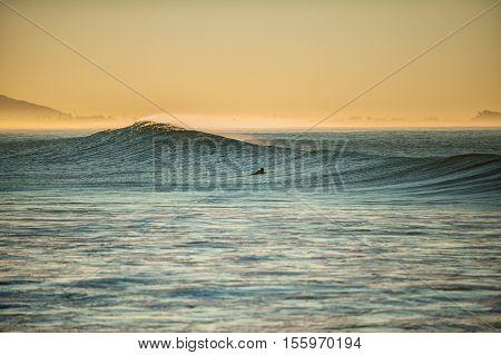 Morning sun glows off surfer paddles over big waves at Ventura beach.