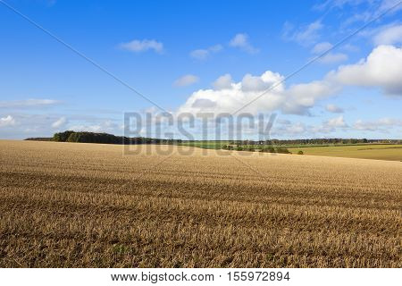 Straw Stubble And Woods