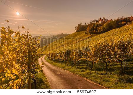 Ladnscape with vineyards at sunset in South Styria (Stajerska) .Border Austria-Slovenia.