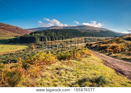 College Valley and The Cheviot, from which the hill range takes its name, is the highest point in Northumberland located in the Anglo-Scottish borders seen here in autumn