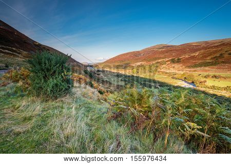College Valley in autumn, is one of five cutting into the Cheviot Hills with College Burn winding its way down
