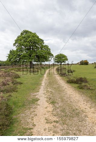 Up the hill on the track in the New Forest through the heathland.