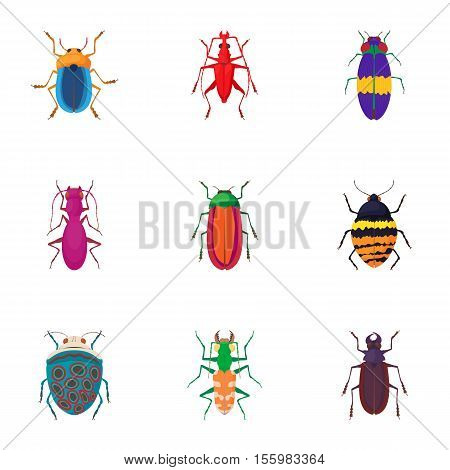 Species of beetles icons set. Cartoon illustration of 9 species of beetles vector icons for web