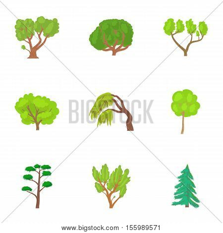 Types of trees icons set. Cartoon illustration of 9 types of trees vector icons for web