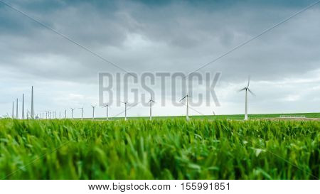Young wheat blowing in the wind during a spring drum. In the background windmills spinning in high speed. Picture taken in the near Espel in the dutch noordoostpolder
