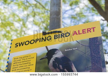 Brisbane, Australia - September 25, 2016: Close-up of Bird swooping warning sign during daytime. During breeding season, birds may swoop people in order to protect their eggs or the young ones.