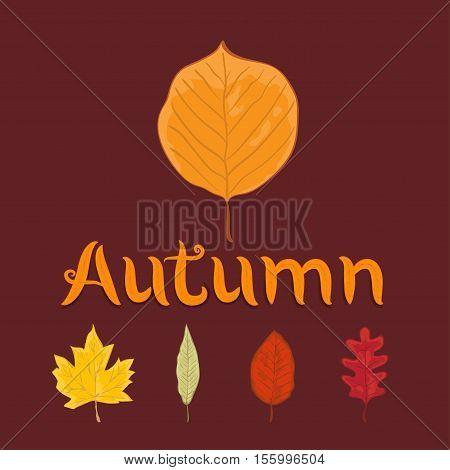 autumn leaves set isolated on burgundy background. simple cartoon flat style vector illustration.