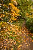 Autumn walk along the South Tyne, on a riverside trail through woodland at Warden in Northumberland poster