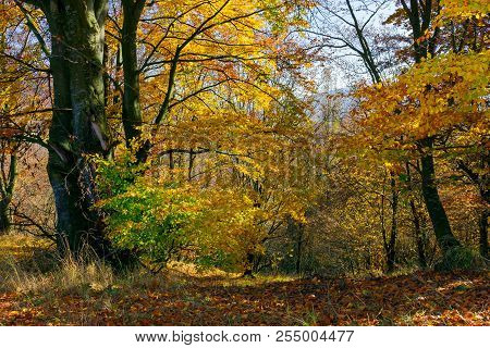 Golden Foliage In The Forest. Beautiful Autumn Scenery In A Bright Light. Pleasant Nature Background