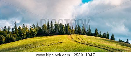 Road Uphill In To The Forest. Beautiful Countryside Panoramic Scenery. Herd Of Sheep Grazing On The