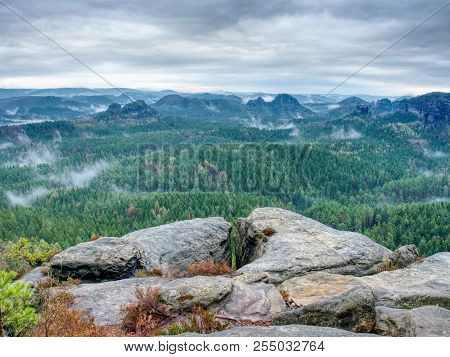 Autumn Forest In Fog. Fall Mist. Enchanted Foggy Forest In Fog,  Trees In Colorful Clouds