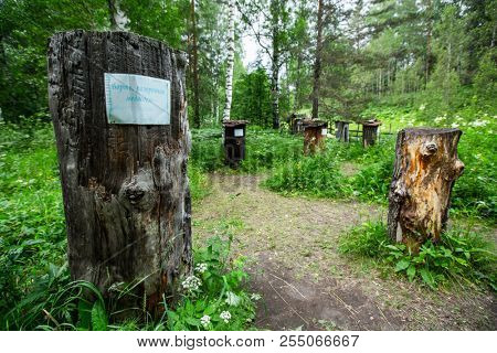 """Remains of trees made for nesting the wild honeybees and hives and cultivation of the ancient apiculture (bee-keeping) The Shulgan Tash Nature Reserve, Russia. Message on the paper - """"Ruined by bear"""