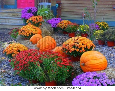 Bright Autumn Colors