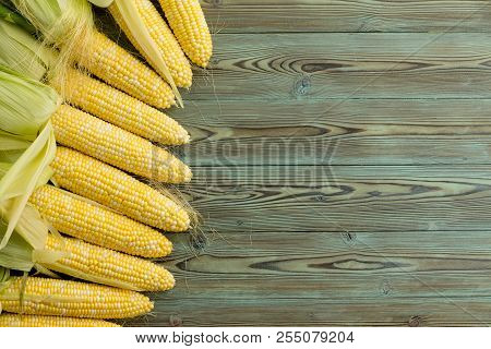 Border Of Freshly Harvested Corn On The Cob With Leaves Peeled Back To Expose The Kernels As A Borde