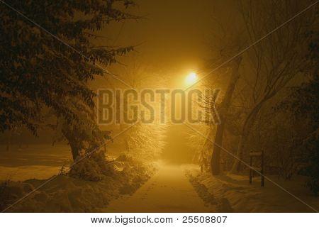 Misterious snowy path