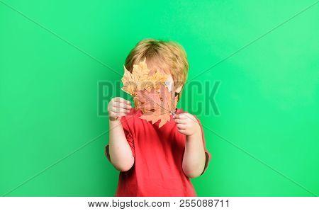 Autumn. Little Boy Holds Maple Leaf. Kid Hides By Autumn Leaf. Yellow Maple Leaf. Boy Holds Leaf. Is