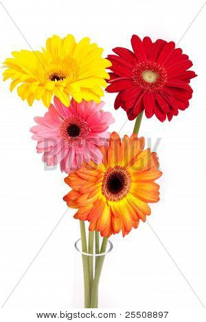 Different colored gerberas