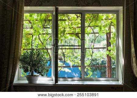 Window In Country House With Houseplant In Sunny Summer Day In Kuban Region Of Russia