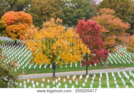 Autumn foliage in Arlington National Cemetery near to Washington DC United States of America