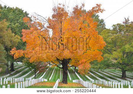Arlington National Cemetery in autumn foliage colors - Circa Washington DC United States of America