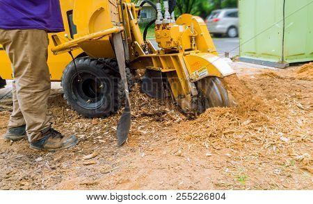 Man Cuts A Fallen Tree Stump Grinder In Action