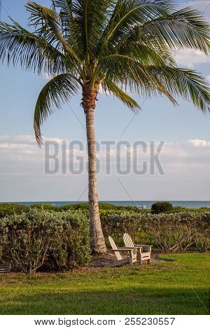 Sanibel Florida Palm Tree With Two High Back Chairs Below