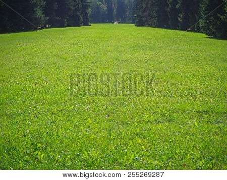 Green Lawn. Scenic View Of A Beautiful English Style Garden With A Large Open Green Grass Lawn.