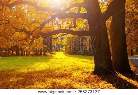 Autumn trees in sunny September autumn park lit by evening sunshine. Colorful autumn landscape. Spreading autumn trees in the sunny autumn forest - autumn sunny landscape scene. Colorful autumn nature