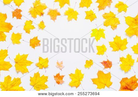 Fall background. Seasonal fall maple leaves on the white background. Fall composition with free space, fall border background