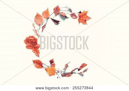 Fall background. Fall composition made of seasonal fall leaves on the white background with free space for text. Fall still life