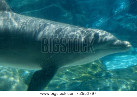 Underwater image of a dolphin in a