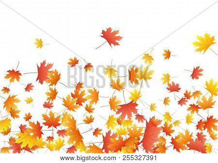 Orange Maple Leaves Background Seasonal Vector Illustration. Fall Season Specific Vector Backdrop. A