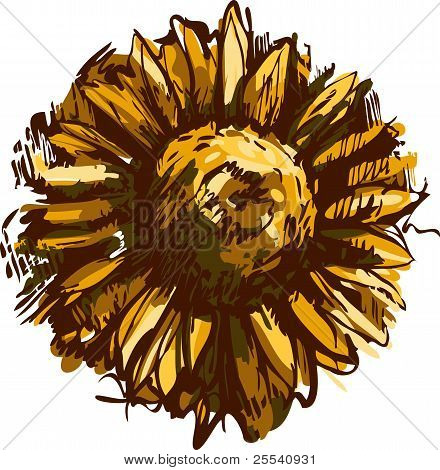 sketch blossoming bud plant sunflower field