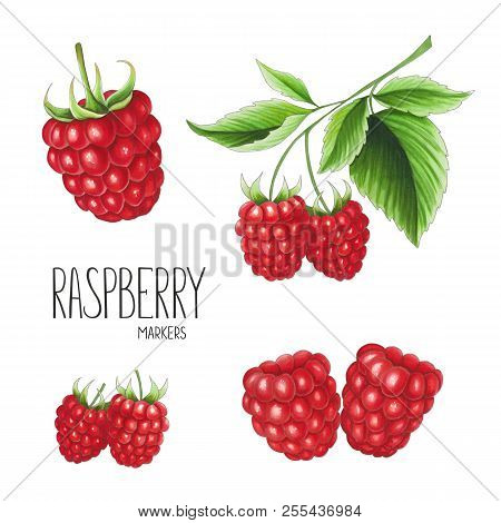 Raspberry On White Background. Sketch Done In Alcohol Markers. You Can Use For Greeting Cards, Poste