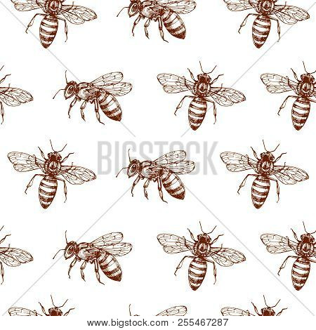 Honey Bee Seamless Pattern. Vintage Doodle Sketch Wrapping Vector Background. Illustration Of Bee In