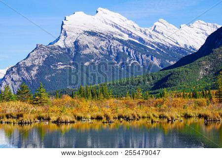 Snow Capped Mount Rundle With Fall Color In Foreground