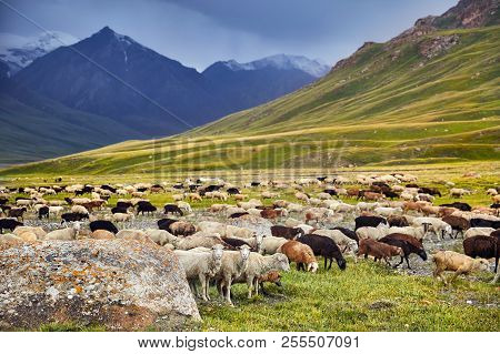 Sheep In The Mountain Valley