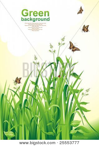 Spring background.  Green grass. Vector illustration.