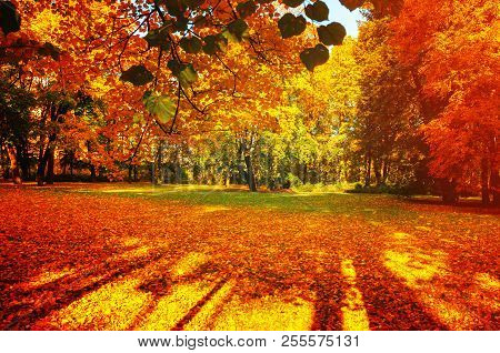 Fall trees in sunny fall park lit by sunshine - sunny fall landscape in bright sunlight, colorful fall landscape scene