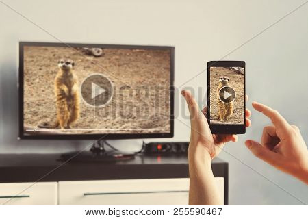 Closeup Of A Smart Phone Is Connected To A Smart Tv. Views Of Videos From Your Phone To The Tv. Use