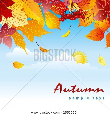 autumn leaves against a background of blue sky