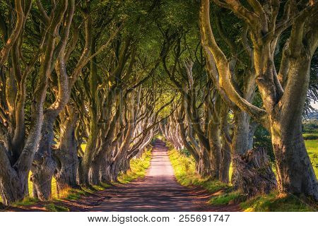 Road Through The Dark Hedges Tree Tunnel At Sunset In Ballymoney, Northern Ireland