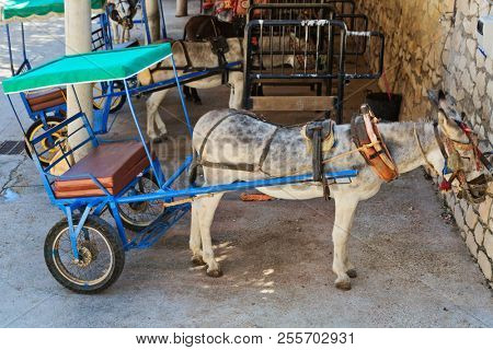 Resting donkey harnessed to the cart resting in Mijas village. Andalusia. Spain