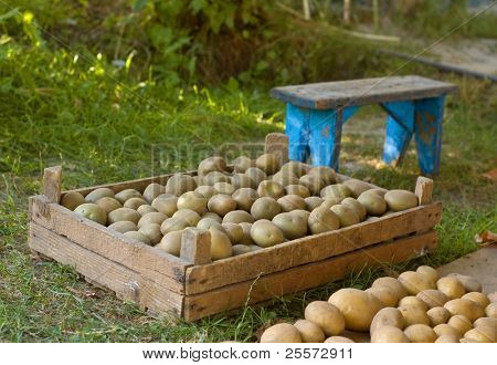 Box with a potato on a grass