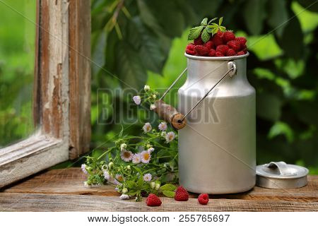 Fresh Raspberry In A Can On The Windowsill With A Bouquet Of Daisies