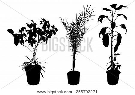 Office And House Plant Silhouette. Set Of Flowers In Pots Isolated On White Background. Vector Illus