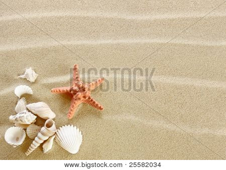 Starfish and shells on a sand beach
