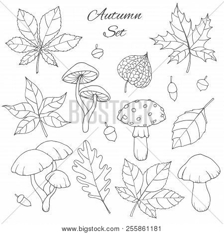Hand Drawn Vector Autumn Set With Oak, Poplar, Beech, Maple, Aspen And Horse Chestnut Leaves, Mushro