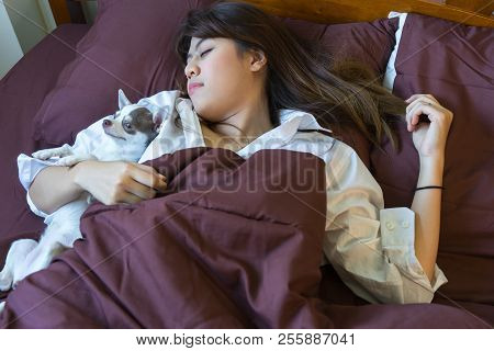 Young Woman Is Lying Down Sleeping With Chihuahua Dog In Bed. Asian Girl And Cute Puppy Dog Sleep In