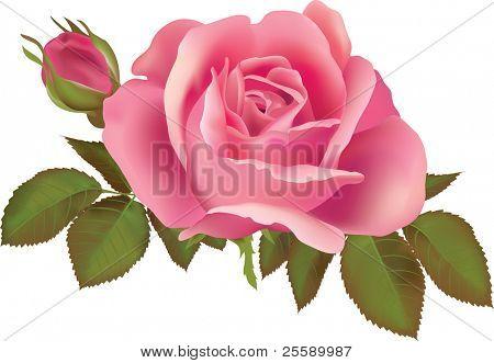 Roze roos illustratie. Bij de illustraties schepping werd Verloopnet hulpprogramma gebruikt